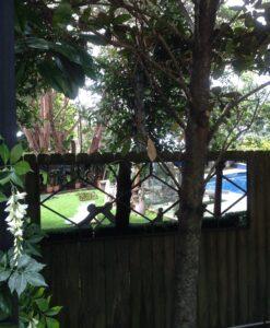 Outdoor mirror on garden wall